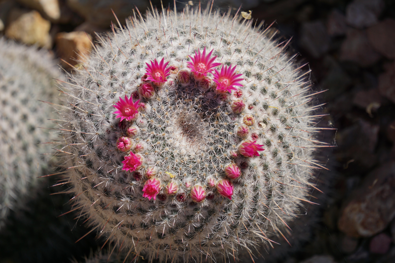 CactusBloomingTop.jpg