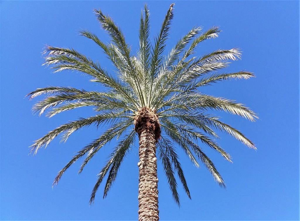 Palm_102019
