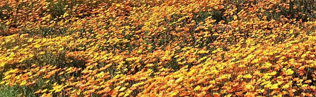 FieldOfWildflowers_Feb2020