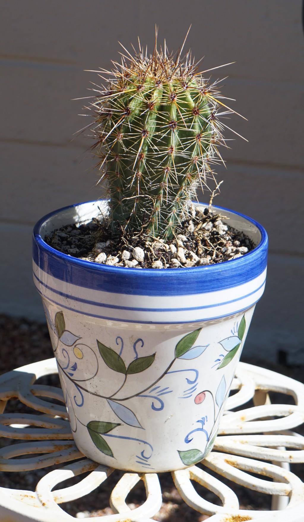 Saguaro2_062520